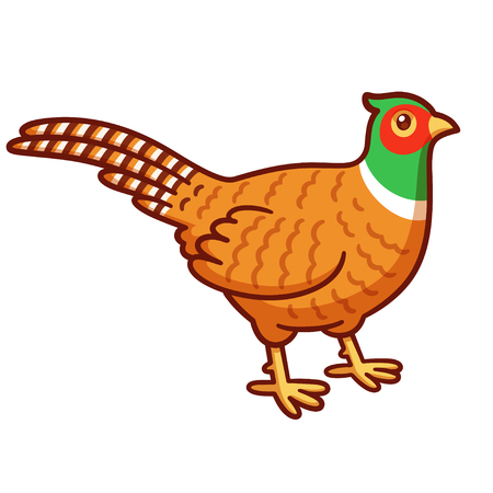 Cartoon style pheasant drawing. Common wild bird and hunting trophy. Isolated vector clip art illustration.