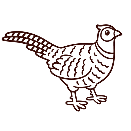 Cartoon style pheasant drawing. Line art contour for coloring book. Isolated vector clip art illustration.