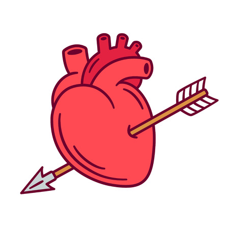 Realistic anatomic heart pierced with arrow, love symbol cartoon drawing. Isolated vector illustration for Valentines day. Illustration