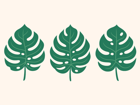 Monstera tropical plant leaf set. Hand drawn design element, simple doodle style. Isolated vector illustration.