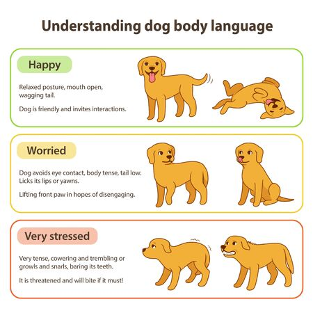 Dog body language infographic chart. Understanding dog poses that mean different emotions: happy and relaxed, tense and worried, stressed and angry. Pet behavior vector illustration.
