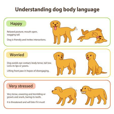 Hond lichaamstaal infographic grafiek. Hondenhoudingen begrijpen die verschillende emoties betekenen: blij en ontspannen, gespannen en bezorgd, gestrest en boos. Huisdier gedrag vectorillustratie.