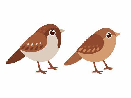 Coppia comune di passero domestico, maschio e femmina. Piccoli uccelli in stile cartone animato carino. Illustrazione di arte di clip di vettore isolato.