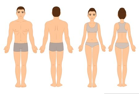Male and female body chart, front and back view, naked in underwear. Blank human body template for medical infographic. Stylized color vector clip art illustration. Foto de archivo - 129521258