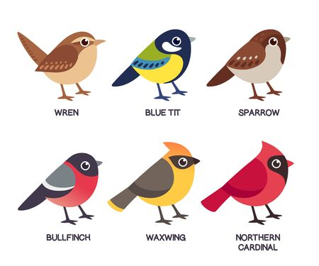 Set of cute cartoon small birds: Cedar Waxwing, Northern Cardinal, common Sparrow, Wren, Blue Tit and Bullfinch. Simple drawing style, isolated clip art vector illustration. Ilustração
