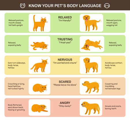 Cat and dog body language comparison, educational infographic chart. Feline and canine emotions and behavior. Cute cartoon vector illustration, printable poster. Stok Fotoğraf - 129521272