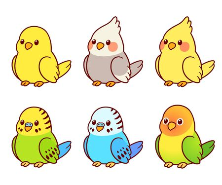 Cute cartoon pet birds illustration set. Cockatiel, parakeet, canary, lovebird. Small parrots isolated vector clip art.