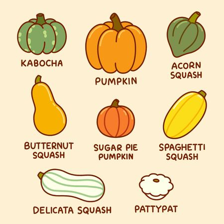 Cartoon infographic drawing of different types of pumpkin and squash. Autumn harvest vegetables, vector clip art illustration set.