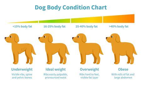 Diagramm zum Körperzustand des Hundes. Körperfettindex für Untergewicht, Übergewicht, Fettleibigkeit und Idealgewicht bei Hunden. Hundegesundheit, tierärztliche Infografik im Cartoon-Stil. Vektorgrafik