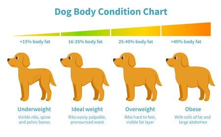 Dog body condition chart. Body fat index for underweight, overweight, obese and ideal weight in dogs. Canine health, veterinary infographic illustration in cartoon style.