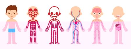My body, educational anatomy body organ chart for kids. Cute cartoon little boy and his bodily systems: muscular, skeletal, circulatory, nervous and digestive. Isolated vector infographic clip art. Vettoriali