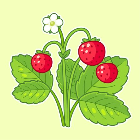 Wild strawberry plant drawing with leaves, flower and ripe berries. Cute cartoon illustration, hand drawn vector clip art. Illustration