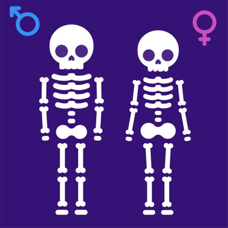 Simple cartoon male and female skeletons with gender symbols. Man and woman x-ray vector illustration.