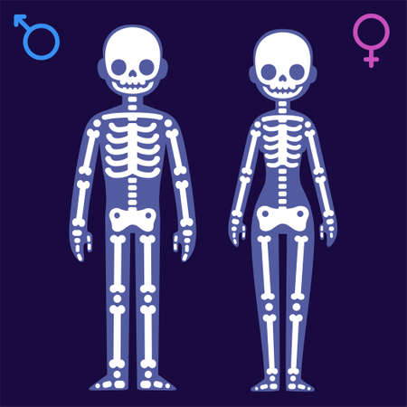 Stylized cartoon male and female skeletons with gender symbols. Man and woman x-ray vector illustration.