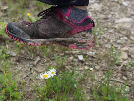 Foot treading wild flowers