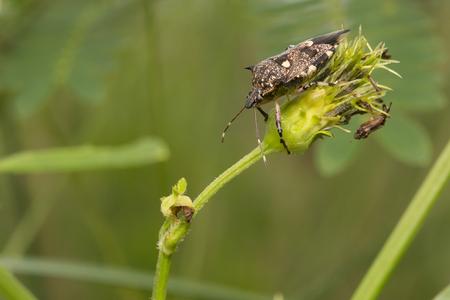 bug's: bugs