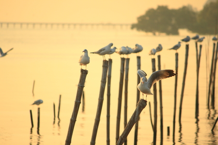 homing: Seagulls standing on poles at sunset