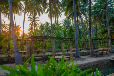 Coconut plantation ditch and dike orchard in Thailand.