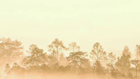 forest in morning fog. misty vapor condensed into thick fog obscure the view creating a silhouette outline of trees groove. Conifer wood in fantastic atmosphere. romantic sunrise in good ecosystem.