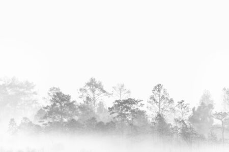 silhouette forest outline. fog covered jungle. Thailand multiple layers tropical wood land.