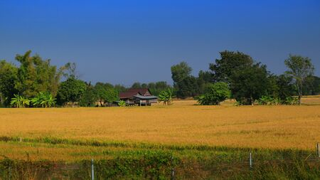 rural scene with small local house in a paddy wet rice field.