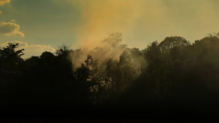 morning scene in the wood. small warm fire creating smoke fog in the forest. slow life peaceful rural living. silhouette jungle view. Reklamní fotografie