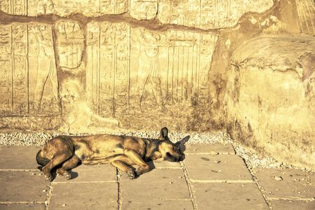 yellow ochre: A Corner of the Egyptian Ruins Gives Shelter for the Sleeping Dog in the Heat of the Day.