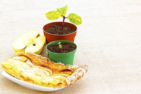 pip: New Beginnings, Apple Pip Through Seedling to Golden Pastry and Juicy Fruit Slices