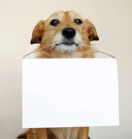 scruffy: Dog holding a blank sign in her mouth