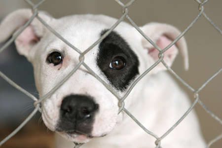 Sad pup looking out through the wires of his cage. Stock Photo