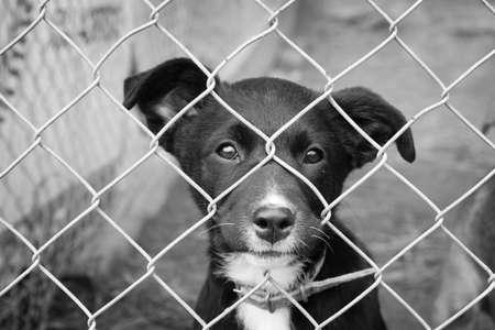 mirada triste: Cachorro triste en una pluma Foto de archivo