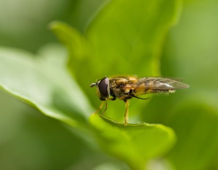 hover: Hover fly grooming Stock Photo
