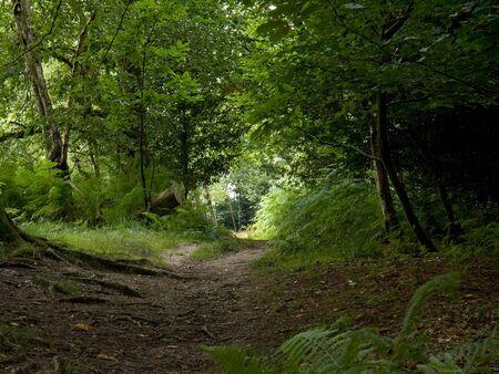 walking path: Woodland Path