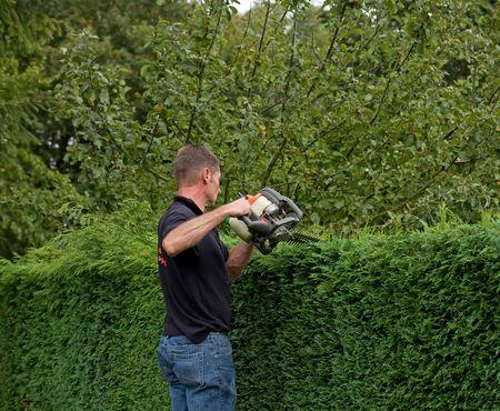 hedges: Hedge cutting 1