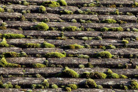 Moos auf Roof  Standard-Bild