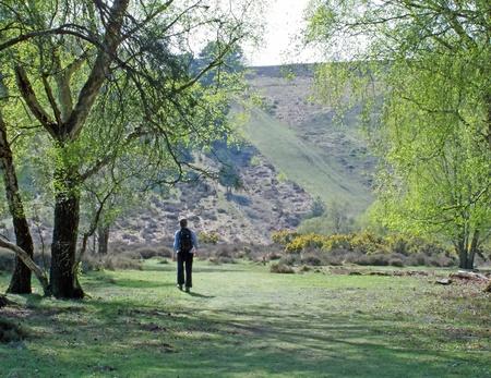 weald: Walking on Ashdown Forest