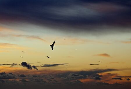 Gulls silhouetted against sky as sun sets with grey clouds and clear sky photo