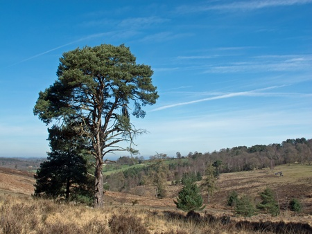 fictional character: View across Ashdown Forest in Sussex, home of fictional character Winnie-the-Pooh and his creator A.A.Milne Stock Photo