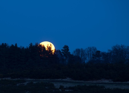 full moon effect: Super Moon rising at dusk on 19th March 2011 over the Ashdown Forest in Sussex, England