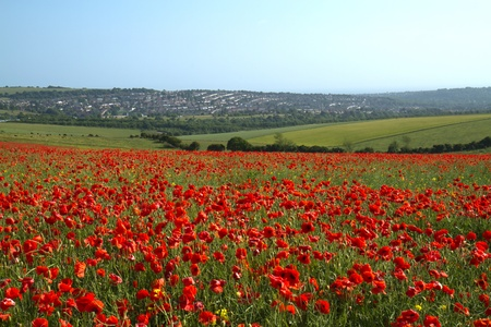 Field of Poppies on Ditchling Beacon outside Brighton in England photo