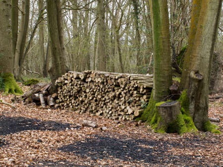 weald: Large pile of logs cut and ready for charcoal burning kiln