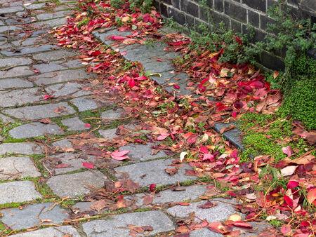 kerb: Autumn leaves fallen on old cobblestones