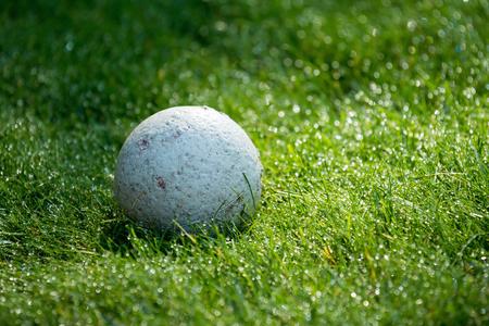 chewed: Chewed dog ball on dewy grass. Stock Photo