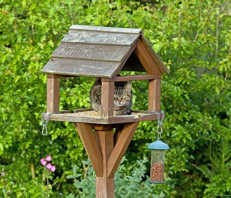 Female Tabby Cat on Birdtable