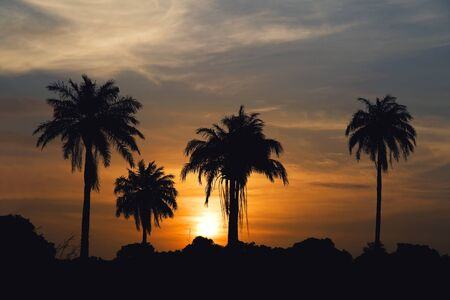 Sunrise and palm trees in The Gambia, West Africa Stock Photo