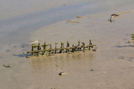 Old fencing in mud at low tide at Tide Mills, Newhaven, East Sussex.