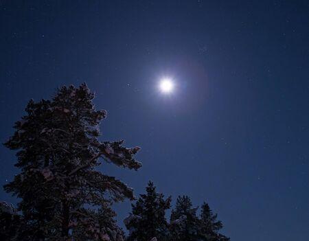Moon and Snow on Tree in Finnish Lapland near Inari.