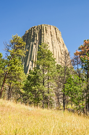 igneous: Devils Tower was formed by magna that cooled and crystallized into phonolite porphyry.  It is a greenish-gray igneous rock with crystals of white fieldspar.