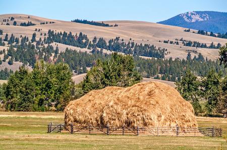 rancheros: Hay que ha sido apilado por un deslizamiento de castores utilizando caballos y mano de obra. El deslizamiento de cascos fue desarrollado por dos rancheros en el condado de Beaverhead, Montana en 1910. Foto de archivo