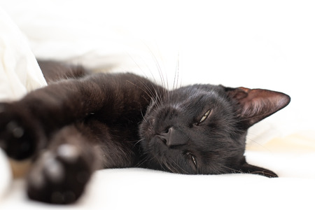 Domestic black cat is sleeping in the bed